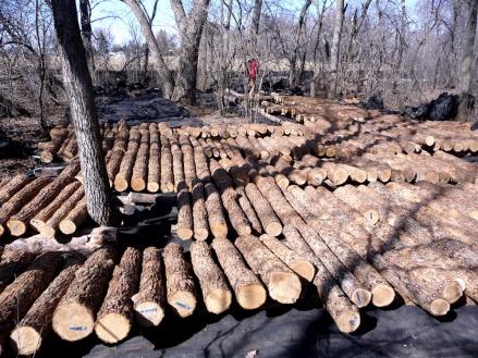 incubating logs